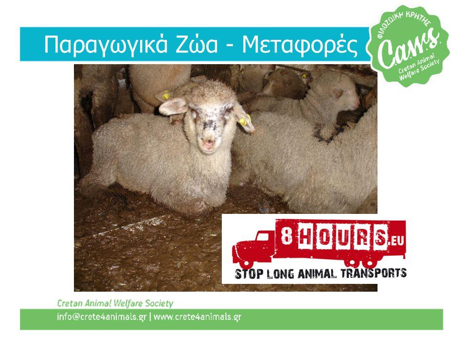 Παραγωγικά Ζώα - Μεταφορές