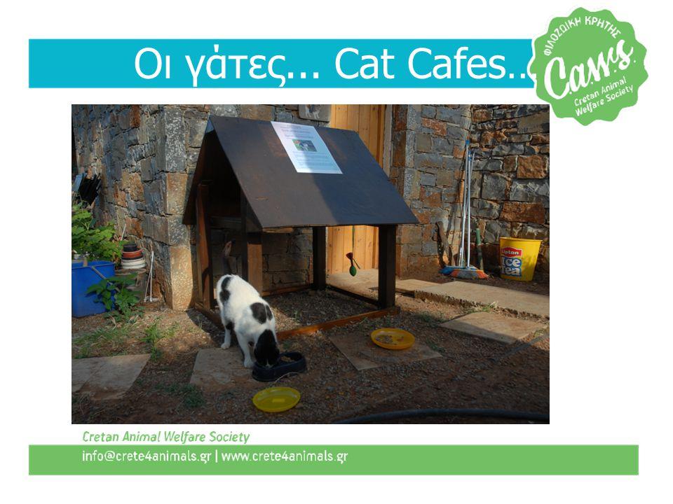 Οι γάτες... Cat Cafes…