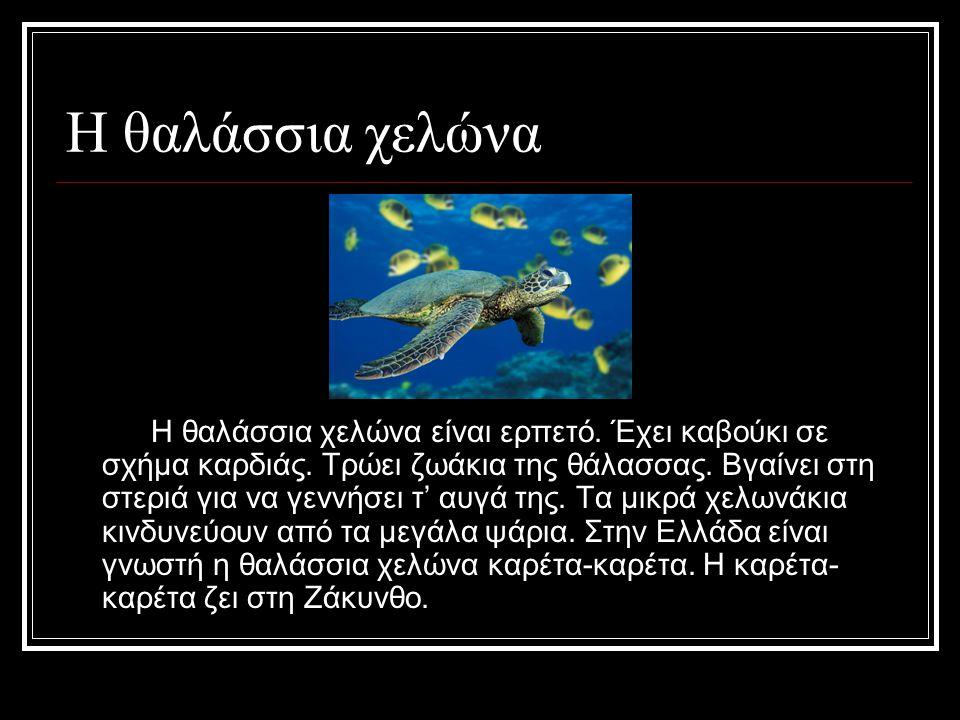 Η θαλάσσια χελώνα Η θαλάσσια χελώνα είναι ερπετό.Έχει καβούκι σε σχήμα καρδιάς.