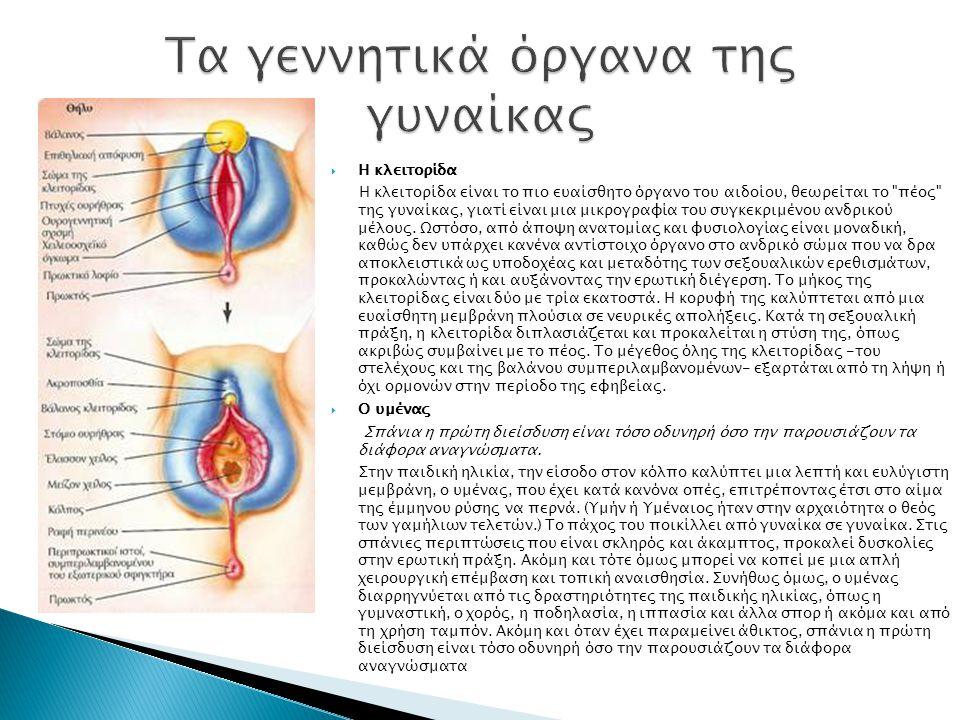  Η κλειτορίδα Η κλειτορίδα είναι το πιο ευαίσθητο όργανο του αιδοίου, θεωρείται το πέος της γυναίκας, γιατί είναι μια μικρογραφία του συγκεκριμένου ανδρικού μέλους.