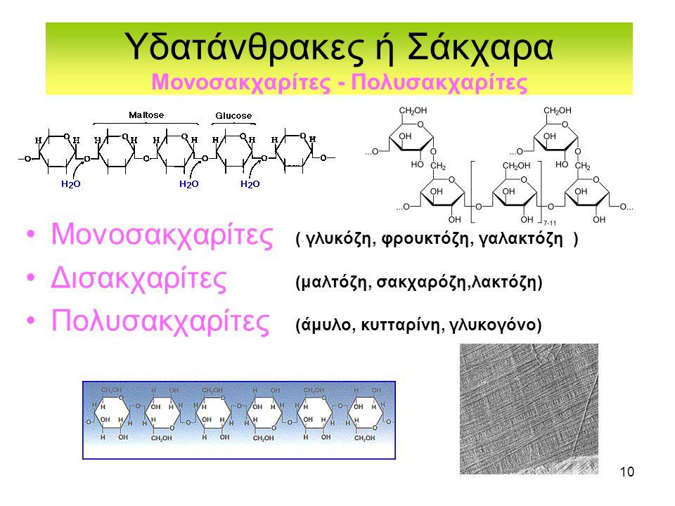 10 Υδατάνθρακες ή Σάκχαρα Μονοσακχαρίτες - Πολυσακχαρίτες •Μονοσακχαρίτες ( γλυκόζη, φρουκτόζη, γαλακτόζη ) •Δισακχαρίτες (μαλτόζη, σακχαρόζη,λακτόζη) •Πολυσακχαρίτες (άμυλο, κυτταρίνη, γλυκογόνο)