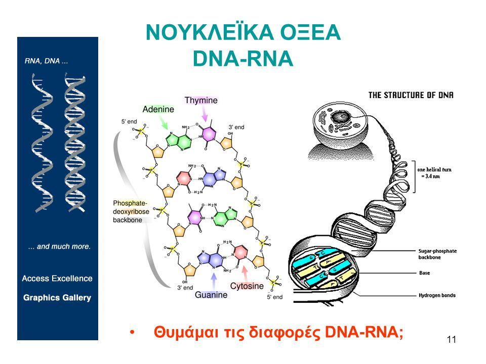 11 ΝΟΥΚΛΕΪΚΑ ΟΞΕΑ DNA-RNA •Θυμάμαι τις διαφορές DNA-RNA;