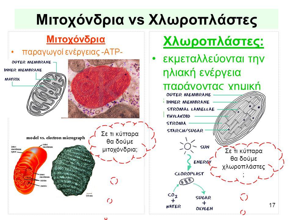 17 Μιτοχόνδρια vs Χλωροπλάστες Μιτοχόνδρια •παραγωγοί ενέργειας -ATP- Χλωροπλάστες: •εκμεταλλεύονται την ηλιακή ενέργεια παράγοντας χημική ενέργεια (γλυκόζη) και οξυγόνο Σε τι κύτταρα θα δούμε μιτοχόνδρια; Σε τι κύτταρα θα δούμε χλωροπλάστες ;