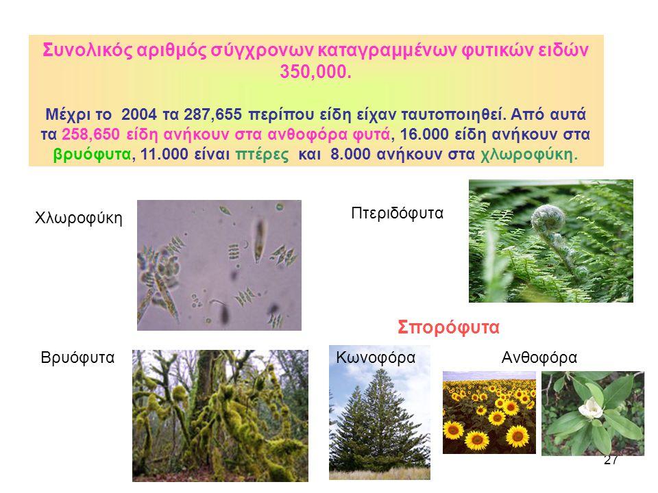 27 Βρυόφυτα Πτεριδόφυτα Σπορόφυτα Ανθοφόρα Συνολικός αριθμός σύγχρονων καταγραμμένων φυτικών ειδών 350,000. Μέχρι το 2004 τα 287,655 περίπου είδη είχα