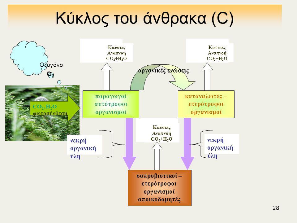 28 Κύκλος του άνθρακα (C) νεκρή οργανική ύλη CO 2+ Η 2 Ο φωτοσύνθεση παραγωγοί αυτότροφοι οργανισμοί καταναλωτές – ετερότροφοι οργανισμοί σαπροβιοτικοί – ετερότροφοι οργανισμοί αποικοδομητές νεκρή οργανική ύλη οργανικές ενώσεις Οξυγόνο Ο2Ο2 Καύσεις Αναπνοή CO 2 +Η 2 Ο