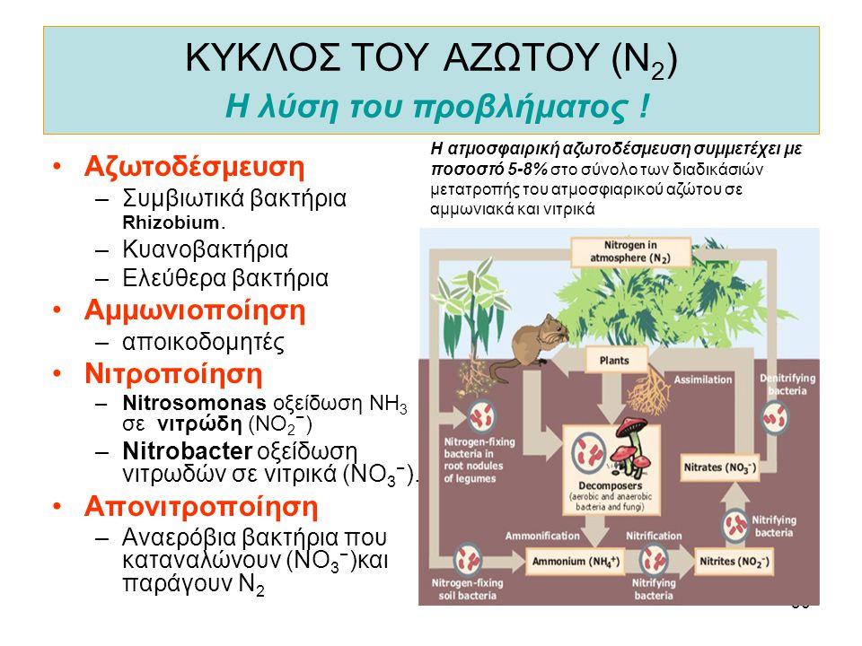 30 ΚΥΚΛΟΣ ΤΟΥ ΑΖΩΤΟΥ (Ν 2 ) Η λύση του προβλήματος ! •Αζωτοδέσμευση –Συμβιωτικά βακτήρια Rhizobium. –Κυανοβακτήρια –Ελεύθερα βακτήρια •Αμμωνιοποίηση –