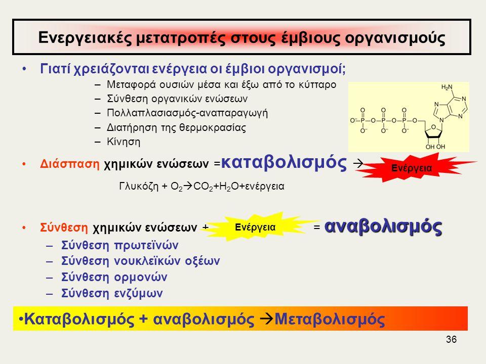 36 Ενεργειακές μετατροπές στους έμβιους οργανισμούς •Γιατί χρειάζονται ενέργεια οι έμβιοι οργανισμοί; –Μεταφορά ουσιών μέσα και έξω από το κύτταρο –Σύνθεση οργανικών ενώσεων –Πολλαπλασιασμός-αναπαραγωγή –Διατήρηση της θερμοκρασίας –Κίνηση •Διάσπαση χημικών ενώσεων = καταβολισμός  Γλυκόζη + Ο 2  CO 2 +H 2 O+ενέργεια αναβολισμός •Σύνθεση χημικών ενώσεων + = αναβολισμός –Σύνθεση πρωτεϊνών –Σύνθεση νουκλεϊκών οξέων –Σύνθεση ορμονών –Σύνθεση ενζύμων Ενέργεια •Καταβολισμός + αναβολισμός  Μεταβολισμός