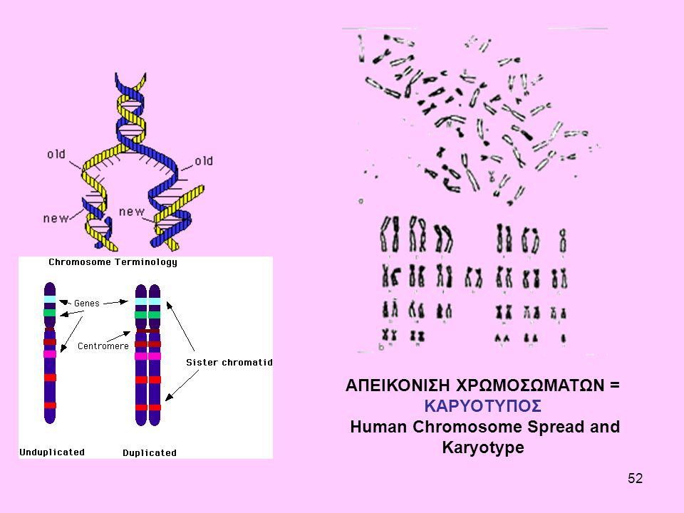 52 ΑΠΕΙΚΟΝΙΣΗ ΧΡΩΜΟΣΩΜΑΤΩΝ = ΚΑΡΥΟΤΥΠΟΣ Human Chromosome Spread and Karyotype