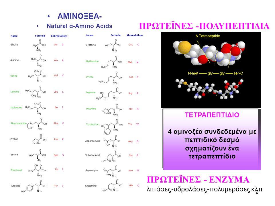 9 •ΑΜΙΝΟΞΕΑ- •Natural α-Amino Acids ΠΡΩΤΕΪΝΕΣ -ΠΟΛΥΠΕΠΤΙΔΙΑ ΤΕΤΡΑΠΕΠΤΙΔΙΟ 4 αμινοξέα συνδεδεμένα με πεπτιδικό δεσμό σχηματίζουν ένα τετραπεπτίδιο ΠΡΩΤΕΪΝΕΣ - ΕΝΖΥΜΑ λιπάσες-υδρολάσες-πολυμεράσες κλπ