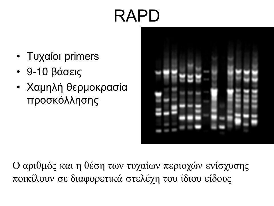 RAPD •Τυχαίοι primers •9-10 βάσεις •Χαμηλή θερμοκρασία προσκόλλησης Ο αριθμός και η θέση των τυχαίων περιοχών ενίσχυσης ποικίλουν σε διαφορετικά στελέ