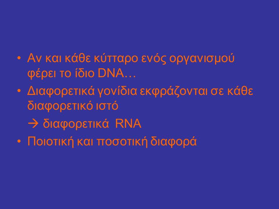 •Αν και κάθε κύτταρο ενός οργανισμού φέρει το ίδιο DNA… •Διαφορετικά γονίδια εκφράζονται σε κάθε διαφορετικό ιστό  διαφορετικά RNA •Ποιοτική και ποσο