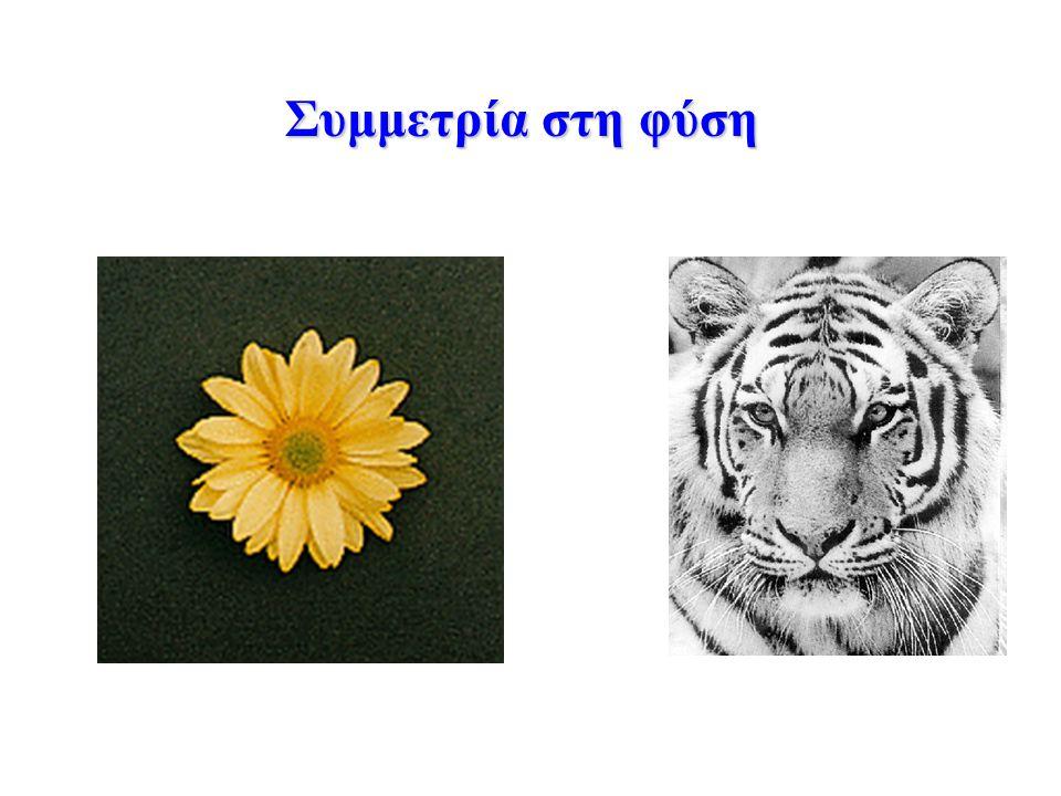 Συμμετρία στη φύση