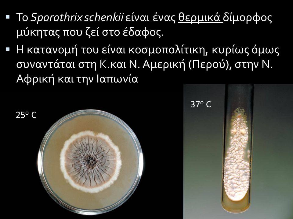  Το Sporothrix schenkii είναι ένας θερμικά δίμορφος μύκητας που ζεί στο έδαφος.  Η κατανομή του είναι κοσμοπολίτικη, κυρίως όμως συναντάται στη Κ.κα