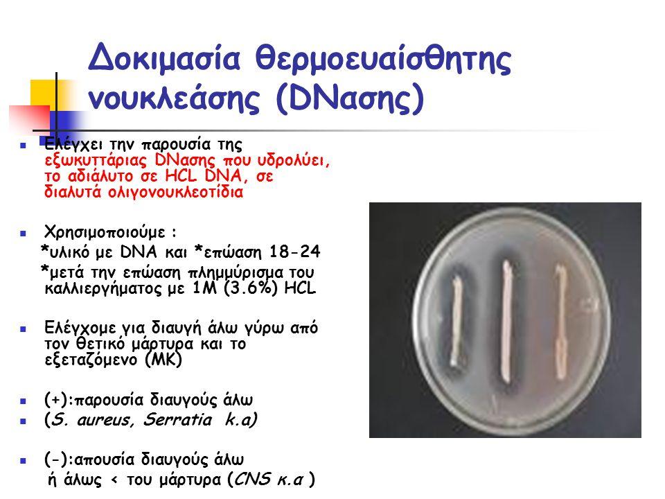 Δοκιμασία θερμοευαίσθητης νουκλεάσης (DNασης)  Ελέγχει την παρουσία της εξωκυττάριας DNασης που υδρολύει, το αδιάλυτο σε ΗCL DNA, σε διαλυτά ολιγονουκλεοτίδια  Χρησιμοποιούμε : *υλικό με DNA και *επώαση 18-24 *μετά την επώαση πλημμύρισμα του καλλιεργήματος με 1Μ (3.6%) ΗCL  Ελέγχομε για διαυγή άλω γύρω από τον θετικό μάρτυρα και το εξεταζόμενο (ΜΚ)  (+):παρουσία διαυγούς άλω  (S.