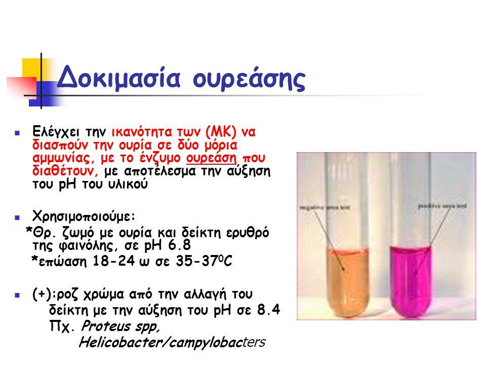 Δοκιμασία ουρεάσης  Ελέγχει την ικανότητα των (ΜΚ) να διασπούν την ουρία σε δύο μόρια αμμωνίας, με το ένζυμο ουρεάση που διαθέτουν, με αποτέλεσμα την αύξηση του pH του υλικού  Χρησιμοποιούμε: *Θρ.