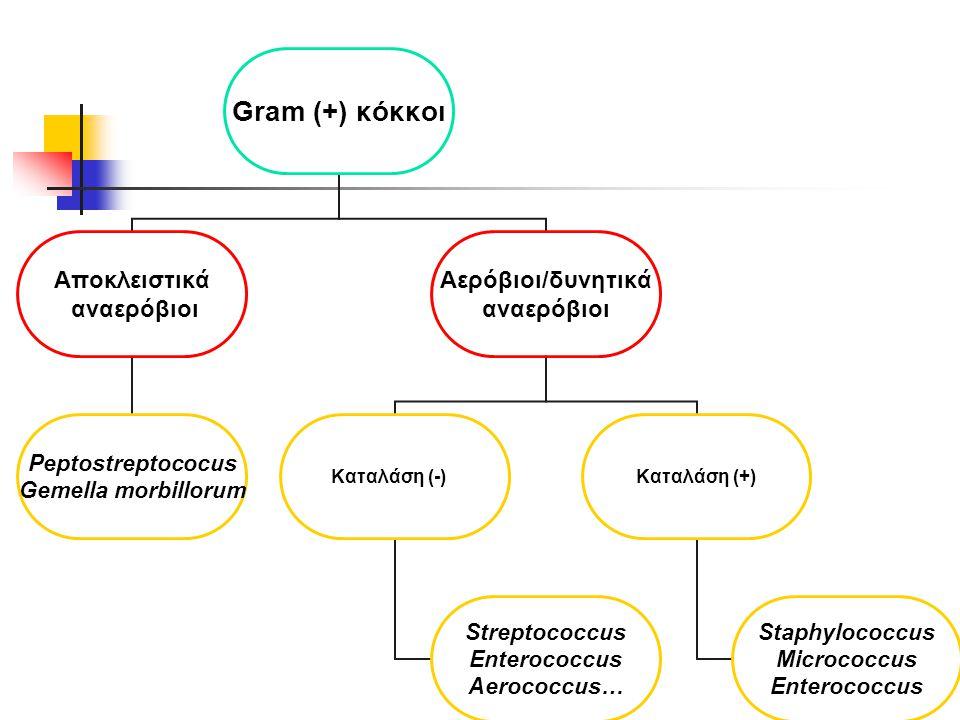Gram (+) κόκκοι Αποκλειστικά αναερόβιοι Peptostreptococus Gemella morbillorum Αερόβιοι/δυνητικά αναερόβιοι Καταλάση (-) Streptococcus Enterococcus Aerococcus… Καταλάση (+) Staphylococcus Micrococcus Enterococcus
