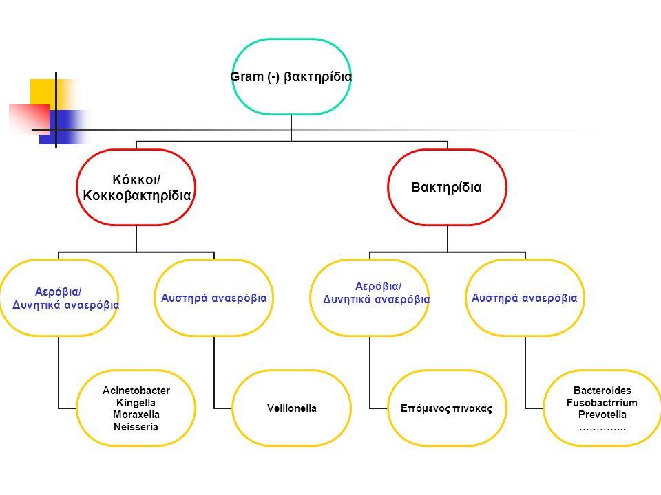 Gram (-) βακτηρίδια Κόκκοι/ Κοκκοβακτηρίδια Αερόβια/ Δυνητικά αναερόβια Acinetobacter Kingella Moraxella Neisseria Αυστηρά αναερόβια Veillonella Βακτηρίδια Αερόβια/ Δυνητικά αναερόβια Επόμενος πινακας Αυστηρά αναερόβια Bacteroides Fusobactrrium Prevotella …………..