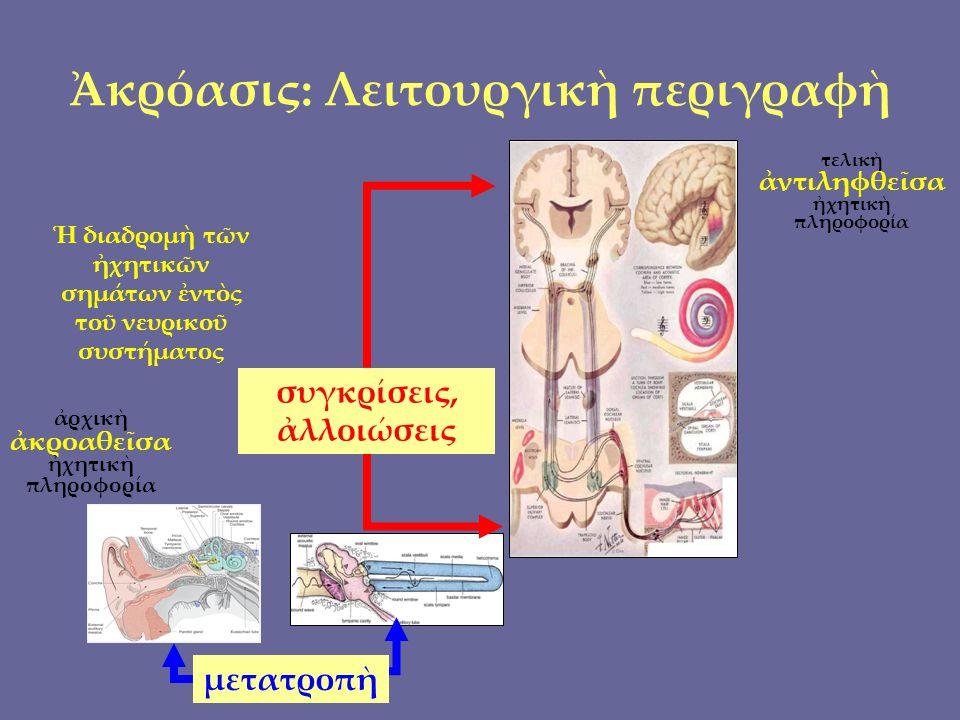 Χρυσανθικὸν μόριον : μῆκος ἢ λογάριθμος; ἔγραψε 9 ἀντὶ 8 ! Κατὰ σύνολον ὲπικριτῶν Χρυσάνθου
