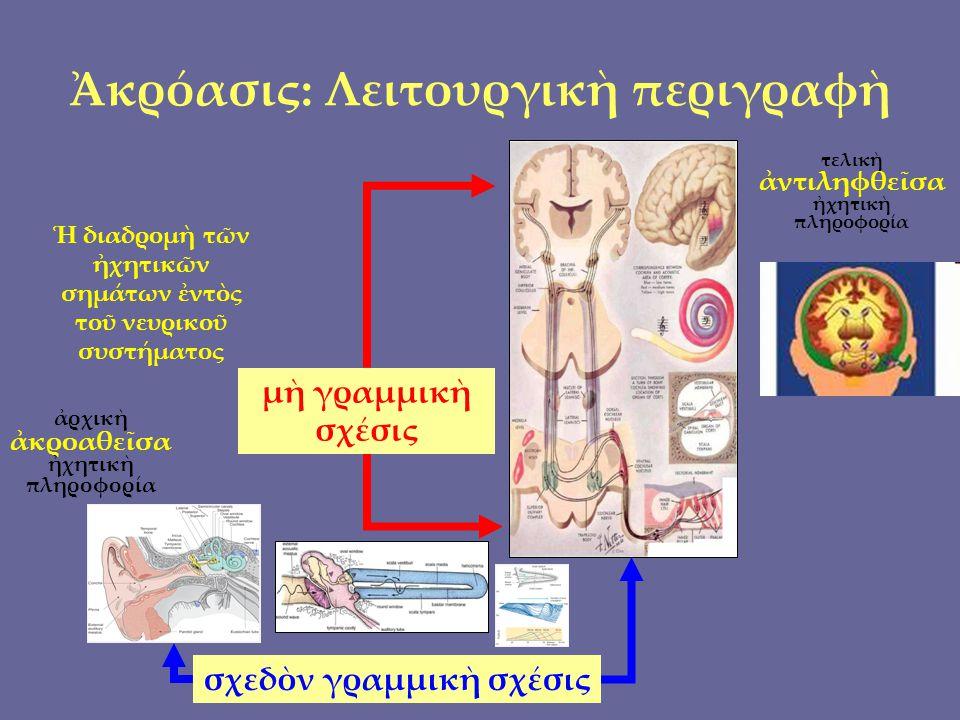 F1F2Ratio CENTS CHRYS log EPIT logCHRYS metr Πα-Κε (μέλους) 445,093676,7011,520 725,3 ( 701,96 ??!.