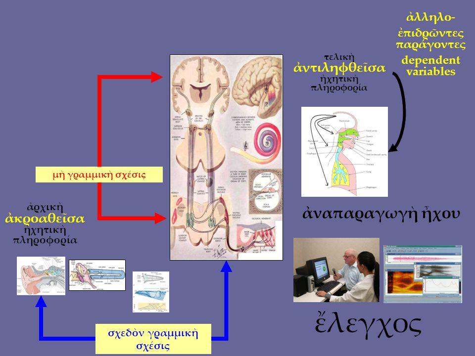 μνήμη = συνάψεις νευρόνων