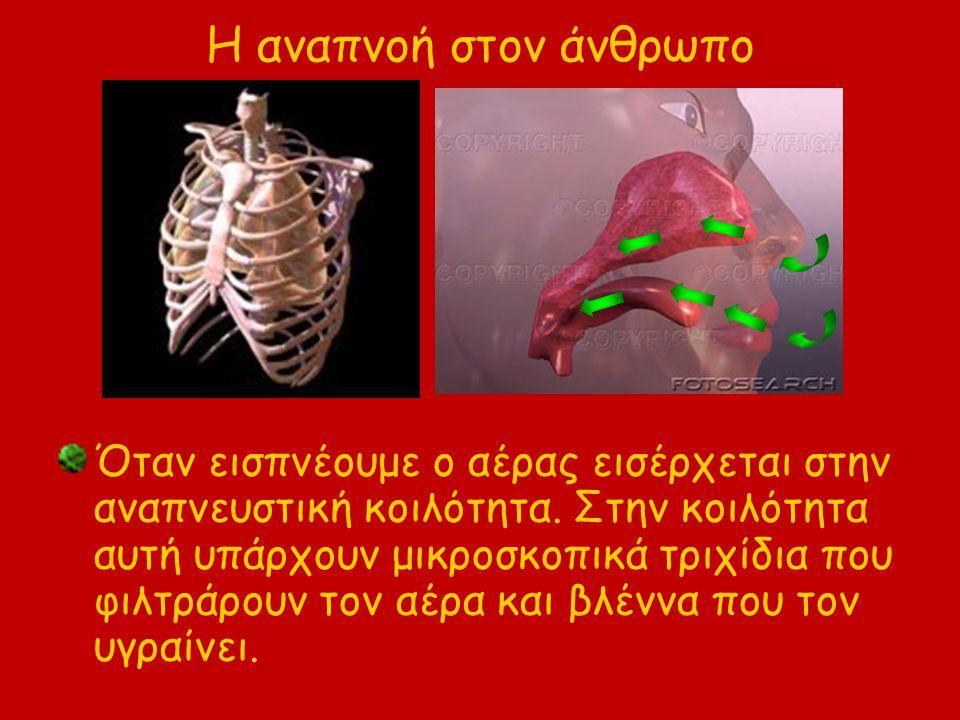 Η αναπνοή στον άνθρωπο Όταν εισπνέουμε ο αέρας εισέρχεται στην αναπνευστική κοιλότητα. Στην κοιλότητα αυτή υπάρχουν μικροσκοπικά τριχίδια που φιλτράρο