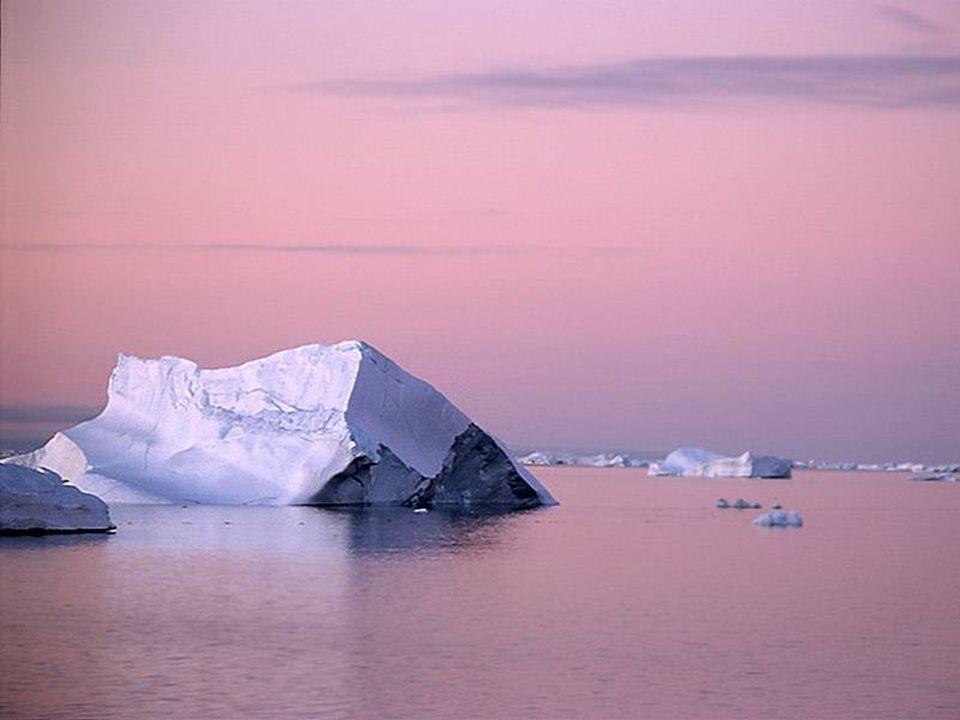 Παρά τις αντίξοες καιρικές συνθήκες, η Ανταρκτική έχει πλούσια πανίδα εκπληκτικά καλά προσαρμοσμένη στις σκληρές συνθήκες.