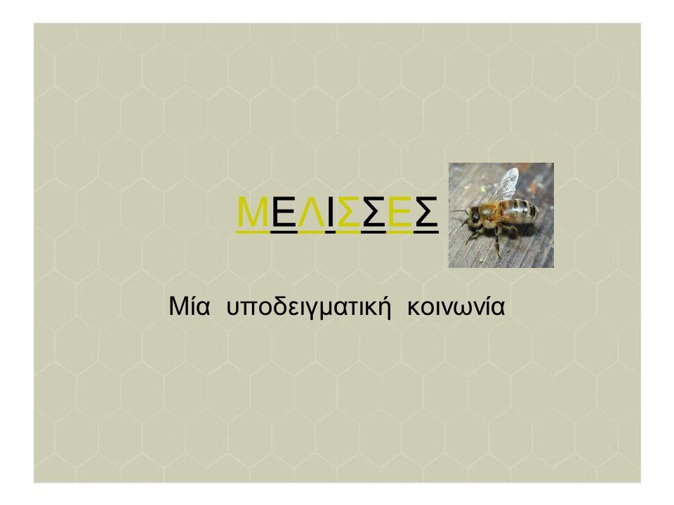 Η κυψέλη Μία τυπική κυψέλη την άνοιξη περιέχει 50 - 80.000 μέλισσες.