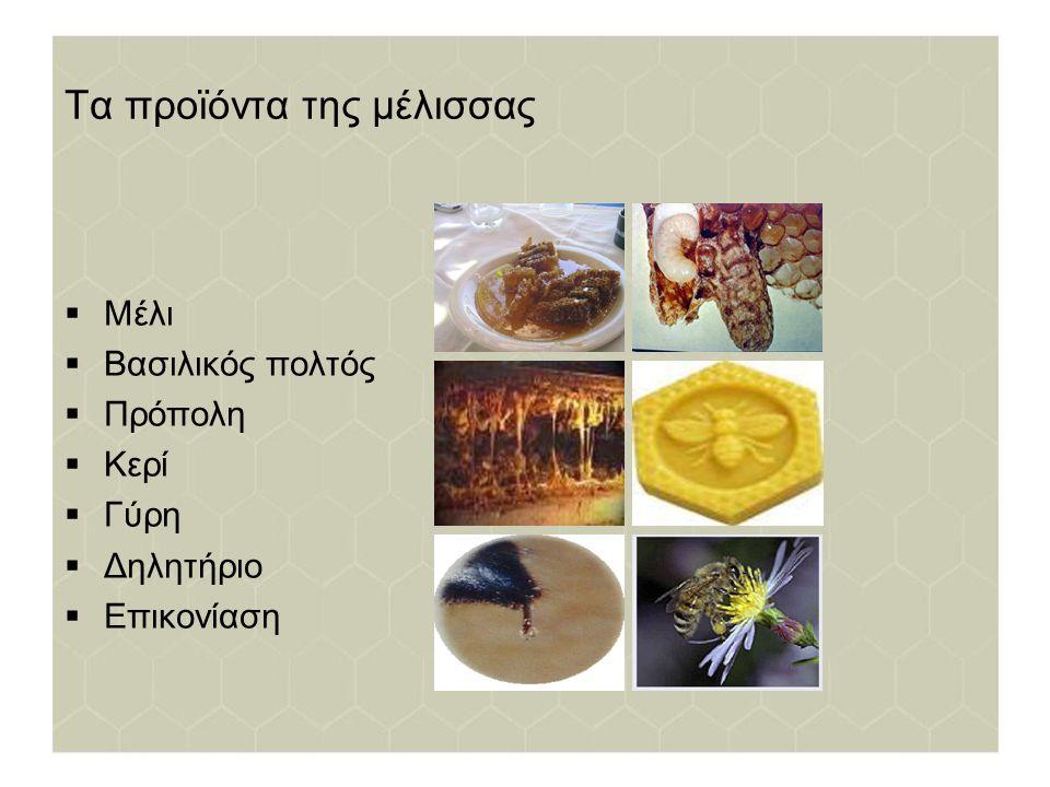 Μέλι Το μέλι είναι η φυσική γλυκιά ουσία που παράγουν οι μέλισσες από το νέκταρ των φυτών, το οποίο συλλέγουν, μετατρέπουν αναμειγνύοντας με ειδικές ύλες του σώματός τους και το φυλάσσουν στις κερήθρες της κυψέλης.