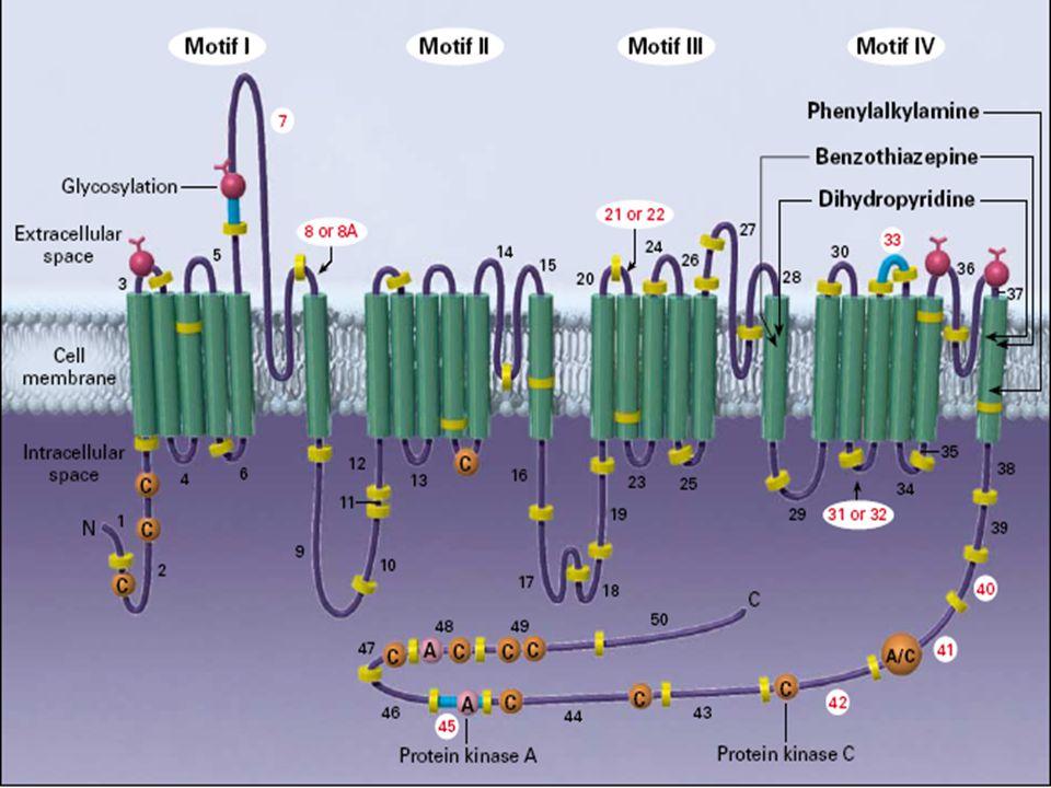 Νεοεμφανιζόμενος Διαβήτης σε μελέτες αντιυπερτασικών φαρμάκων Νεοεμφανιζόμενος Διαβήτης σε μελέτες αντιυπερτασικών φαρμάκων -14 -4 -34 -2 -23 -25* -25 -20 -40* -30** CAPPPACEIvsConvSTOP-2ACEIvsConvALLHATACEIvsDHOPEACEIvsPL STOP-2CAvsConv INSIGHTCAvsD ALLHATCAvsD STOP-2ACEIvsCA LIFEARBvsBBSCOPEARBvsConv * T, 2 yrs; ** T, 4 yrs -21 CHARMARBvsPL INVESTCAvsConv -16** -16
