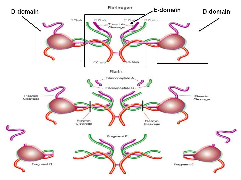 E-domain D-domain