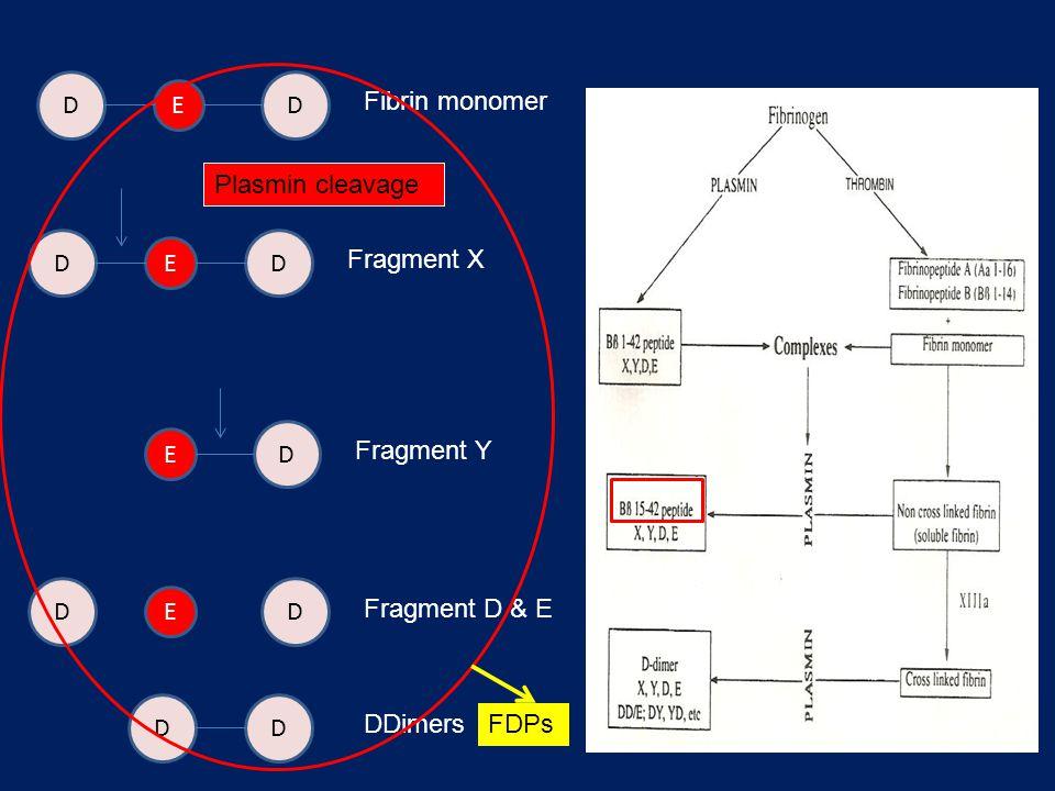 DD E Fibrin monomer DD D DD E E Fragment X Fragment D & E Fragment Y DD DDimers E Plasmin cleavage FDPs