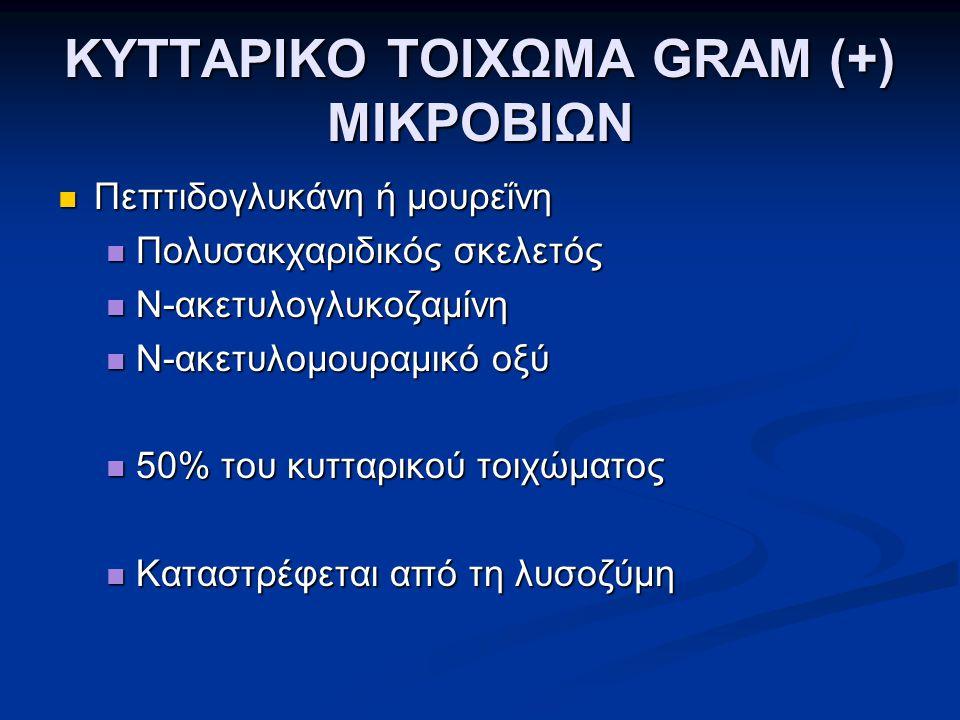 ΚΥΤΤΑΡΙΚΟ ΤΟΙΧΩΜΑ GRAM (+) ΜΙΚΡΟΒΙΩΝ  Πεπτιδογλυκάνη ή μουρεΐνη  Πολυσακχαριδικός σκελετός  Ν-ακετυλογλυκοζαμίνη  Ν-ακετυλομουραμικό οξύ  50% του