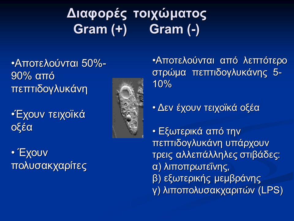 Διαφορές τοιχώματος Gram (+) Gram (-) •Αποτελούνται 50%- 90% από πεπτιδογλυκάνη •Έχουν τειχοïκά οξέα • Έχουν πολυσακχαρίτες •Αποτελούνται από λεπτότερ