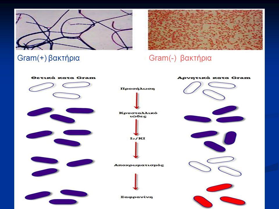Gram(-) βακτήριαGram(+) βακτήρια