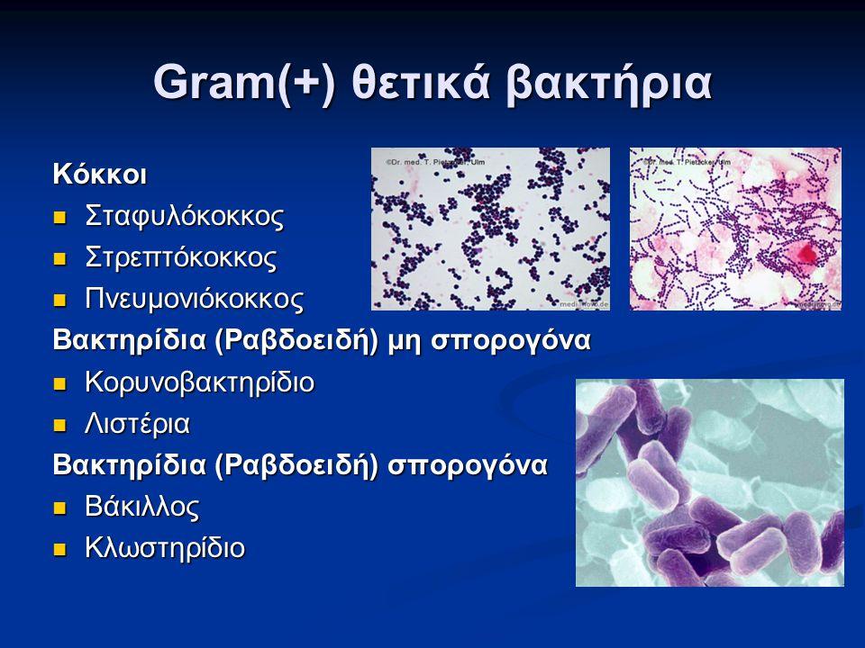 Gram(+) θετικά βακτήρια Κόκκοι  Σταφυλόκοκκος  Στρεπτόκοκκος  Πνευμονιόκοκκος Βακτηρίδια (Ραβδοειδή) μη σπορογόνα  Κορυνοβακτηρίδιο  Λιστέρια Βακ