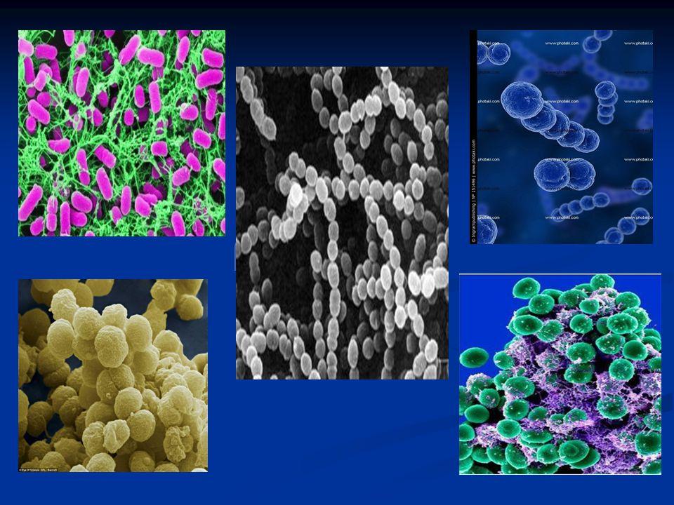 ΔΟΜΗ ΒΑΚΤΗΡΙΩΝ  Κυτταρικό τοίχωμα  Κυτταρική μεμβράνη  Κυτταρόπλασμα  Βακτηριακό DNA  Πλασμίδια  Κοκκία  Ριβοσώματα Κάποια βακτήρια μπορεί να φέρουν εξωτερικές δομές: •Έλυτρο •Μαστίγια και βλεφαρίδες