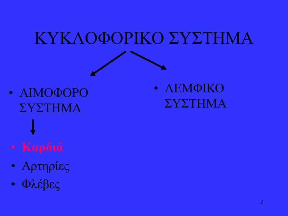 14 •Από τη δεξιά κοιλία εκφύεται η πνευμονική αρτηρία που μεταφέρει φλεβικό αίμα στους πνεύμονες.