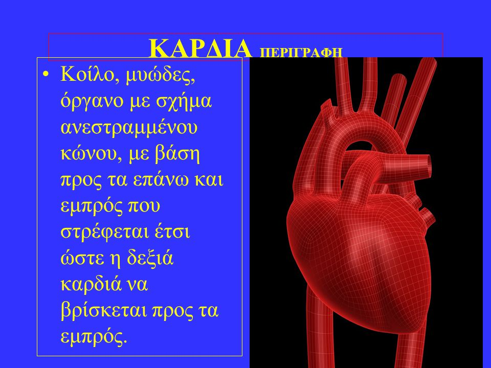 5 ΚΑΡΔΙΑ ΠΕΡΙΓΡΑΦΗ •Κοίλο, μυώδες, όργανο με σχήμα ανεστραμμένου κώνου, με βάση προς τα επάνω και εμπρός που στρέφεται έτσι ώστε η δεξιά καρδιά να βρί