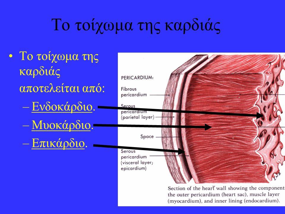 7 Το τοίχωμα της καρδιάς •Το τοίχωμα της καρδιάς αποτελείται από: –Ενδοκάρδιο. –Μυοκάρδιο. –Επικάρδιο.