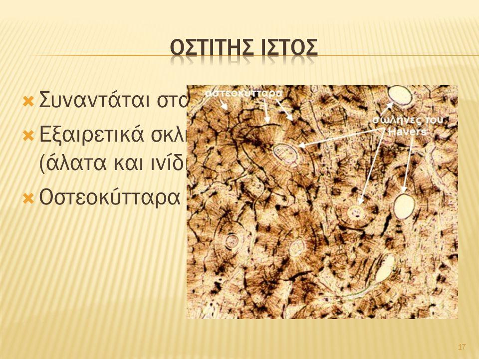  Συναντάται στα οστά  Εξαιρετικά σκληρή μεσοκυττάρια ουσία (άλατα και ινίδια κολλαγόνου)  Οστεοκύτταρα σε κοιλότητες της 17