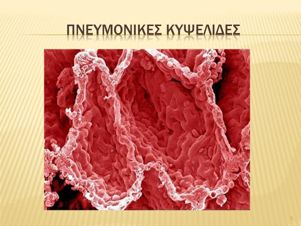  Στέρεος και εύκαμπτος  Χονδροβλάστες (κύτταρα ιστού): σε κοιλότητες της μεσοκυττάριας ουσίας  Βρίσκεται σε: 1.