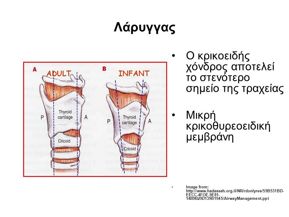 Λάρυγγας •Ο κρικοειδής χόνδρος αποτελεί το στενότερο σημείο της τραχείας •Μικρή κρικοθυρεοειδική μεμβράνη •Image from: http://www.hadassah.org.il/NR/r