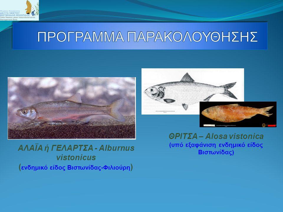 Θαλασσαετός Haliaaetus albicilla ( χαρακτηριστικό είδος του Πάρκου ) Τσακάλι – Canis aureus ( Στο Δ.