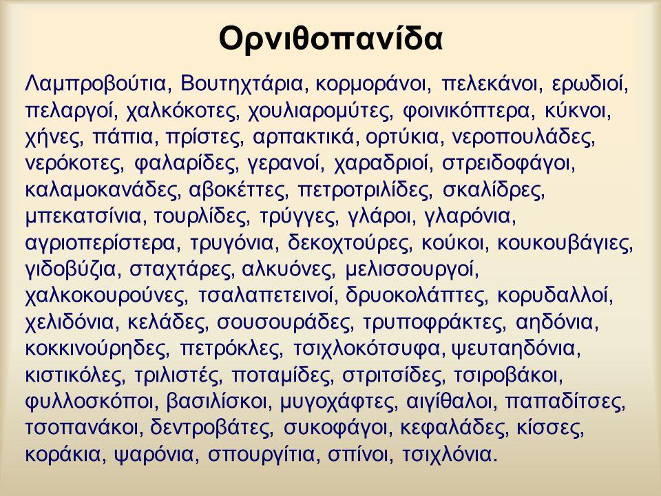 Ορνιθοπανίδα Λαμπροβούτια, Βουτηχτάρια, κορμοράνοι, πελεκάνοι, ερωδιοί, πελαργοί, χαλκόκοτες, χουλιαρομύτες, φοινικόπτερα, κύκνοι, χήνες, πάπια, πρίστ