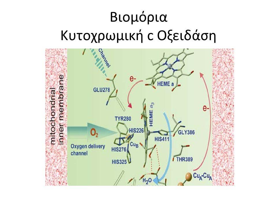 Cytochrome c Oxidase