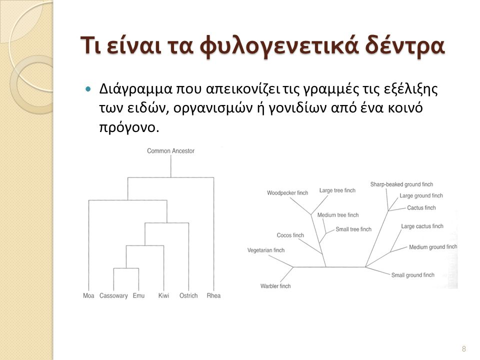 Τι είναι τα φυλογενετικά δέντρα  Διάγραμμα που απεικονίζει τις γραμμές τις εξέλιξης των ειδών, οργανισμών ή γονιδίων από ένα κοινό πρόγονο.