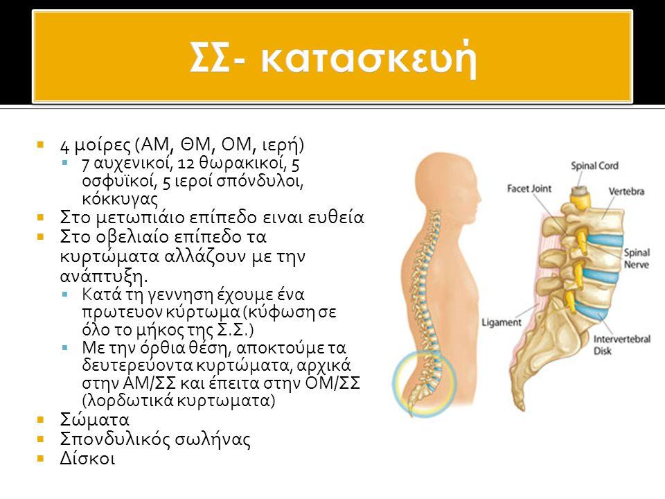  Σώματα  Μεσοσπονδύλιο υς δίσκους  Facet Joints