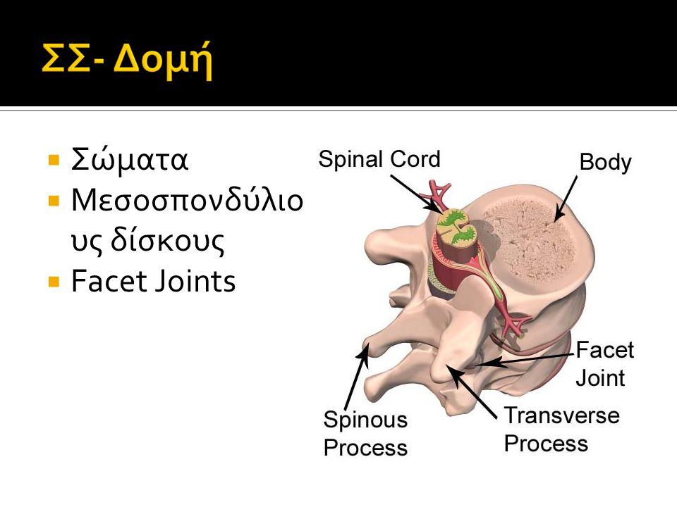  Δύναμη και σταθερότητα  Παρέχει δυναμη και σταθερότητα για το υπόλοιπο σώμα καθώς και για τα βαριά οστα του κρανίου.