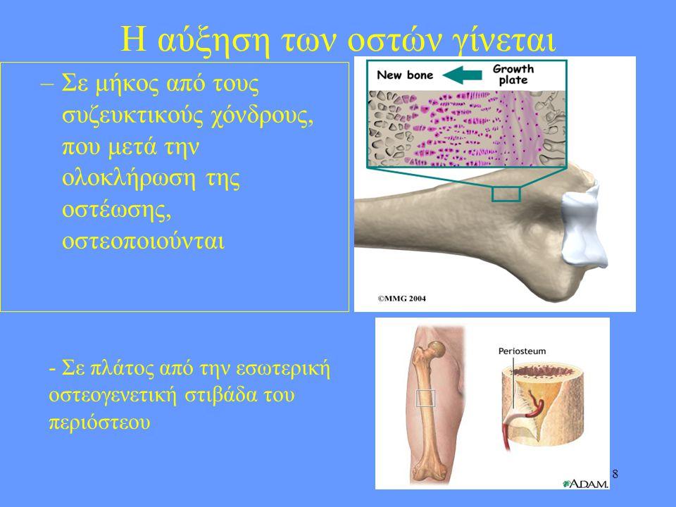 8 Η αύξηση των οστών γίνεται –Σε μήκος από τους συζευκτικούς χόνδρους, που μετά την ολοκλήρωση της οστέωσης, οστεοποιούνται - Σε πλάτος από την εσωτερ