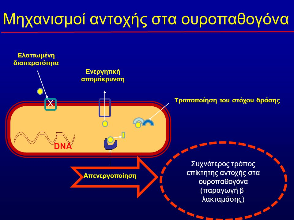 DNA Ελαττωμένη διαπερατότητα X Ενεργητική απομάκρυνση Απενεργοποίηση Τροποποίηση του στόχου δράσης Mηχανισμοί αντοχής στα ουροπαθογόνα Συχνότερος τρόπος επίκτητης αντοχής στα ουροπαθογόνα (παραγωγή β- λακταμάσης)